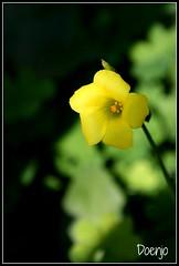 Flor amarilla (Doenjo) Tags: flor instagram alcaládeguadaíra sevilla doenjo 2017 andalucía flores canon450d