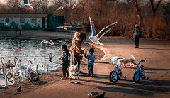 Take Away  : ) (Gordon McCallum) Tags: familyphoto park pond swans seagulls dog kidsbicycles feedingthebirds victoriapark glasgowswestend glasgow sony sonya6000 sigma30mm114contemporarylens