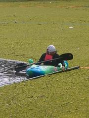 fully poluted by salvinia weed (elly.sugab) Tags: lake water river polution poluted salvinia danau ranupani semeru