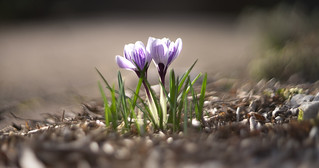 Les promesses de printemps