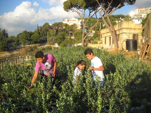 Jad Rawad & Lia Picking Blueberries Jun 21, 2015