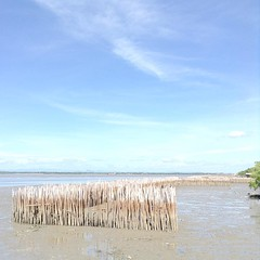 ช่วงนี้ไม่ค่อยห่างทะเล| ดอนหอยหลอด| ไม่ได้โดนกระเทยไทยด่านะ
