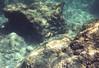 IMG_3135 (Elise Granados) Tags: island hawaii big sep8