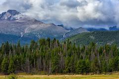 Elk Grazing Below the Mighty Rocky Mountains (Happy Photographer) Tags: autumn trees storm fall nature field clouds photography colorado wildlife rmnp elk rockymountainnationalpark horizonal amyhudechek