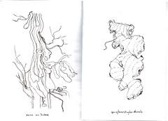 Caderno de Ramificaes (Mrcio.Diegues) Tags: planta ccbb concept desenho botanica anatomia pensamento artistsbook conceito darwing darw scketchbook livrodeartista marciodiegues ervanariamvel