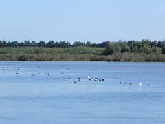 file14259 (Gianluigi Roda / Photographer) Tags: landscapes delta waters waterbirds waterlands