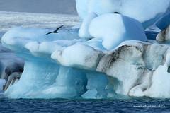 e jokulsarlon bird (Simon -n- Kathy) Tags: ice iceland lagoon glacier icebergs jokulsarlon