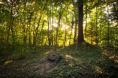 Le Rideau de Lumire (Curtain of light) (Gilderic Photography) Tags: wood light green nature lumix belgium belgique belgie curtain panasonic lumiere liege foret gilderic lx3 dmclx3