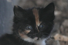 kitten_1283 (ZK-NGJ) Tags: