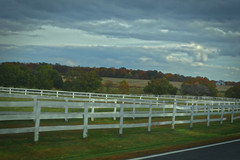 white fence green grass (btusdin) Tags: woodenfence whitefence odc horsefence