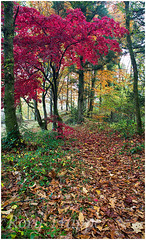 Gwydyr forest (Rory Trappe) Tags: autum autumncolours autumncolors betwsycoed snowdonia a5 redacer acerred