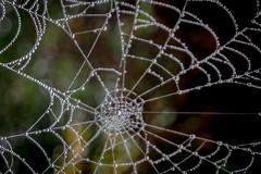 web2 (Steve J Cottis) Tags: park fog web dartford tokina1116mm28 brooklandslake nikond5300