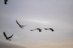 Les Oiseaux en Libert (- Ali Rankouhi) Tags: park water birds fire iran tehran