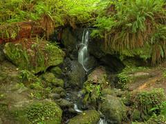 Trillium Falls (fractalv) Tags: california waterfall redwoodnationalpark payitforward trilliumfallstrail