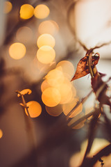 Christmas lights and autumn leaf (thethomsn) Tags: christmas wood autumn winter tree canon germany weihnachten season happy photography gold lights leaf focus soft advent dof bokeh outdoor branches 14 sunday sigma nopeople led depthoffield change dreamy fairylights magical creamy muted prechristmas 30mm goldcolored fourthadvent thethomsn