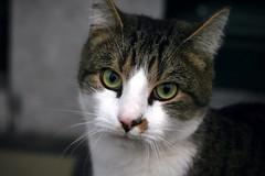 Cat expression (katjacarmel) Tags: kat gato animals cats cute eyes expression