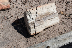 Holz - oder? (sgplewka) Tags: 2016 usa petrifiedforestnp holbrook arizona us