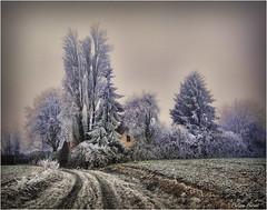 Chapelle Royale - Eure & Loir 2017 (Philippe Hernot) Tags: chapelleroyale eureloir 28 france philippehernot kodachrome nature hiver winter nikond700 nikon posttraitement