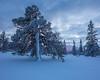 Lillådalen II (Gustaf_E) Tags: blue forest gördalen kväll landscape landskap lillådalen nationalpark naturreservat pine pines pink skog snow snö sverige sweden tall vinter winter woods