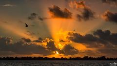 September 2016 Sunset Slikken van Flakkee (BraCom (Bram)) Tags: bracom sunset zonsondergang lake meer sun zon cloud wolk sky silhoettes silhouetten birds vogels water sunrays zonnestralen evening avond clouds wolken dirksland goereeoverflakkee slikkenvanflakkee grevelingen veermansplaat zuidholland nederland annualreview jaaroverzicht southholland netherlands holland canoneos5dmkiii widescreen canon 169 canonef24105mm bramvanbroekhoven jaaroverzicht2016 nl