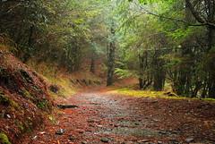 Fallen Leaves (seancheng0731) Tags: leaves tress road path fallen taiwan nantou 台灣 南投 mountain hiking 落葉