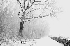 a tree stood listening .. (monika keller) Tags: hbm bench benchmonday tree blackandwhite bw sw snow winter january