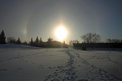 Sundogs (Waddellz) Tags: sky sun winter 40d sundog cold edmonton