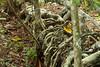 Esqueleto (Rodolph Sartin) Tags: moraceae arecaceae flora goiás