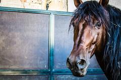 Doma IV (|Raquel|) Tags: cordoba españa spain horse horses stable andaluz andalucía caballo caballos color purasangre doma tame caballerizas travel trip animal animales animals