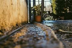 (Giuseppe Chirico) Tags: colorsinourworld color colora colors city street streetphotography photo photography yellow shadow light morning morninglight sun sunlight winter cold rain water