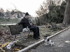Roma_04 (Giulio Gigante) Tags: roma rome street strada solitude solitary solitario solitudine italia italy colors portrait cane dog fiume tevere river panchina eccoqua giulio giuliogigante giuliogigantecom