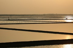 salt lines (PawL23) Tags: petchaburi thailand water salt farming agriculture sunrise sun reflection earthasia aasia unseenasia
