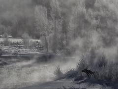 moose3 (Drew Hamilton) Tags: moose grandteton