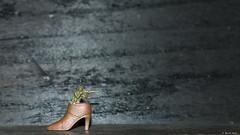 Tuer, c'est le pied (misterblue66) Tags: plastic plastique plasticart figurine toys jouet soldat gi kill tuer shoes chaussure pied cool 50mm tiny geets benoitgeets misterblue
