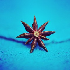 Day 24 Star Anise (DenisePhoto1) Tags: spices turquoise staranise photographychallenge project365 photoaday 365project 365 day24 24365