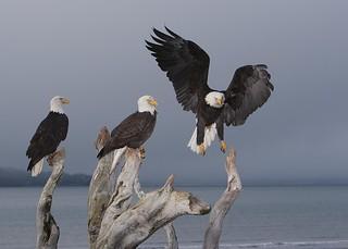 A Congregation of Eagles