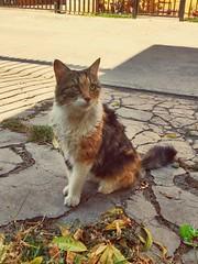 Lulú bella (katherinecontreras) Tags: cat cats gatos animales pelitos cucho neko