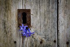Abrir puertas (Pilonga) Tags: haiku poesia benedetti pany clau floretes