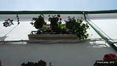 Medina Bahiga (Landahlauts) Tags: almohades almoravides andalousie andalouzia andalucia andalusië andalusia andalusie andalusien andalusiya andaluzia andaluzio andaluzja ciudaddelagua comarcadelasubbeticacordobesa endulus fujifilmxpro1 medinabahiga priegodecordoba reinonazari reinoziri flores balcon maceta luz puebloandaluz xf18mmf2r