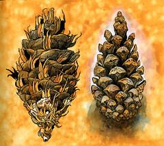 2 x cones (Martin Blunt) Tags: pine cones compare prepared paper sketchbook penand ink watercolour white gouache