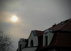 Dach (maciey24) Tags: dach roof rooftop building budynek dom house sky niebo słońce sun clouds chmury birds ptaki zwierzęta animals animal bird ptak zwierzę gałęzie drzewo tree branches windows okna window okno tiles dachówka