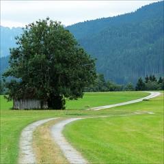 double turn (loop_oh) Tags: green nature turn germany way bayern deutschland bavaria natur oberbayern hovel huette feld felder wiese wiesen hut alpen turns allemagne baum gruen duitsland weg wege kurve kurven ammergaueralpen ammergau