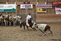 BJ1A8514 (yoann.coin) Tags: horse france western cutting ncha remoray