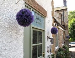 Bakewell - Living Cottage (minioreocake) Tags: britain england   bakewell lavender ball   living cottage