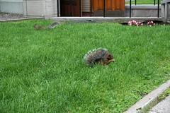 Wiewiórki | Squirrels