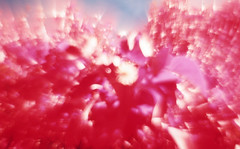 img011 (Photo Taker #9) Tags: infrared orangefilter colorinfraredfilm aerochrome
