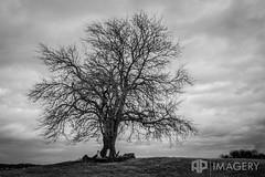 Two Graves (AP Imagery) Tags: blackandwhite tree monochrome grave kentucky ky headstones gravestone owensboro 81 lyddane