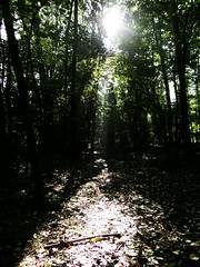 Ray of sunlight (iseeatrain) Tags: autumn light sunlight cold green nature leaves forest dark effects ray branch path fallen trunk