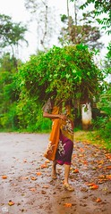 IMG_6286 (athingcalledlife) Tags: blackandwhite india green art nature rain photography colours lush coorg virajpet vsco
