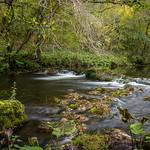 River Dove thumbnail